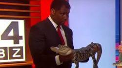 Un alligator agité effraie cet animateur de télévision