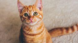 Plus de 200 000 personnes ont déjà vu la vidéo de ces chats à la fois mignons et