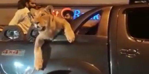 Virée en voiture avec sa lionne: un habitant de Karachi arrêté