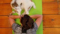 Du yoga avec des chèvres, la dernière mode aux