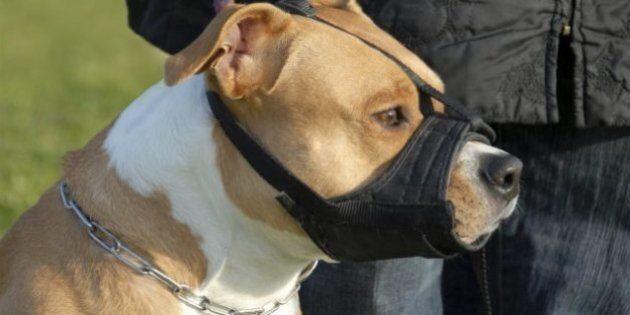 Dernier jour pour obtenir un permis spécial pour chien de type