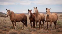 On achève bien les chevaux en «Mort