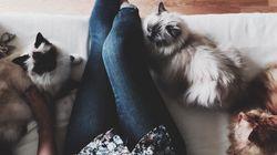 Refuser le rôle de la «crazy cat