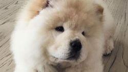 Justin Bieber n'est plus sur Instagram (mais son chien