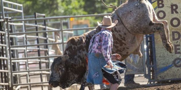 A member of a rodeo safety staff preparing to calm an angry bull.