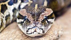 Le python de Verdun fait bien rire les