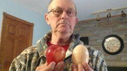Une poule pond un oeuf gros comme une