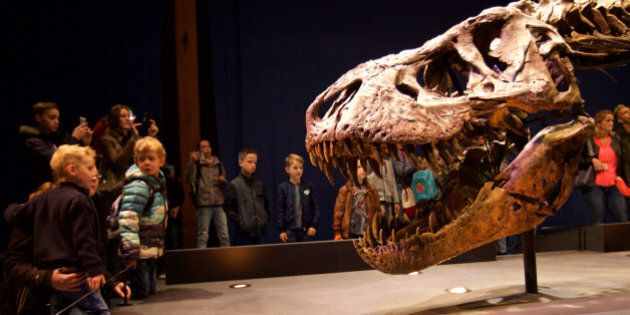 LEIDEN, Oct. 20, 2016 -- Photo taken on Oct. 20, 2016 shows a Tyrannosaurus Rex skeleton displayed during...