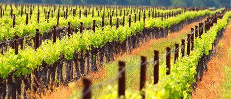 Les vins du Languedoc selon les Vignobles