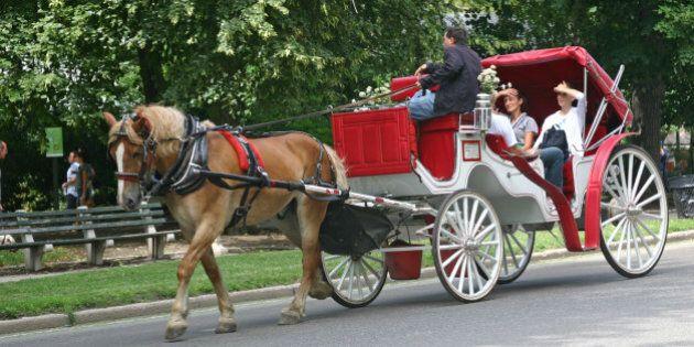 New York, USA-August 16, 2011:  A horsedrawn carriage carries tourist through New York City's Central Park, a popular tourist destination in Manhattan.