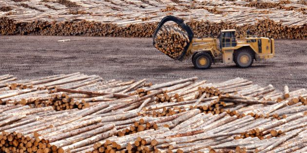 Logs at a sawmill. Lumber industry. Front-end loader hauling trees. Foresty. Industrial equipment. British Columbia's major industries include forestry, which is an economic driving in the western province. Pulp and paper, sawmills, and logging operations are located throughout the region.