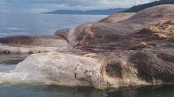 Cette énorme créature marine morte a échoué sur une île et tout le monde