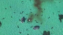 Des dizaines de requins dévorent une baleine sous l'oeil d'un drone