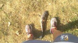 Un poisson-chat tombe du ciel et frappe une femme en plein visage