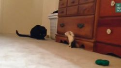 Il court, il court le furet... et ce chat a du mal à suivre
