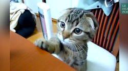 Vous n'allez pas résister longtemps aux supplications de ce chaton