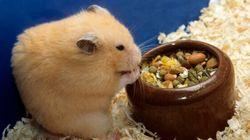 Il confectionne un tout petit plâtre pour son hamster