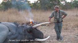 Un chasseur écrasé par une éléphante qu'il