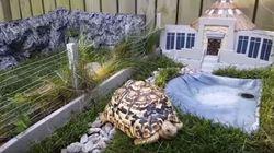 Il crée un mini Jurassic Park... pour sa tortue