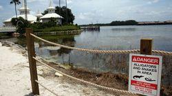 Disney construit un mur autour du lac où un alligator avait tué un