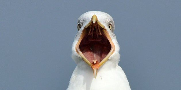I send you a picture of a seagull with his mouth open all. Hope you