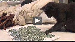 Ce chat devient complètement fou devant une illusion