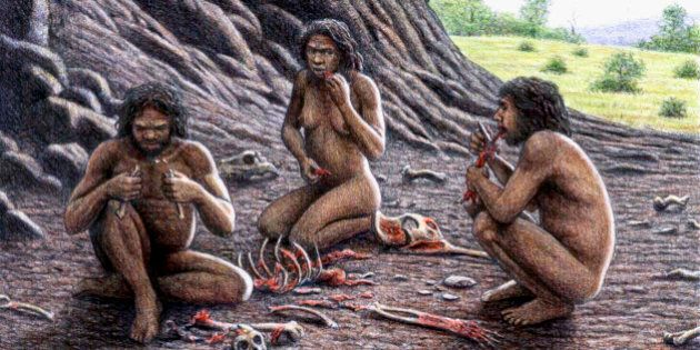Homo antecessor practicing cannibalism, illustration. The remains of this hominid were discovered in...