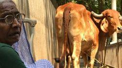 La «guerre des vaches» fait rage en