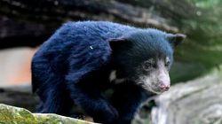 Trois ours retrouvés dans la salle de bain d'une halte routière au