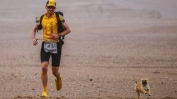 Il court un marathon, une chienne errante termine la course avec