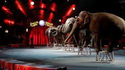 Le cirque Barnum ferme ses