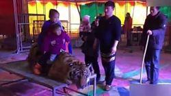 Cette vidéo d'un tigre ligoté pour des photos souvenir fait