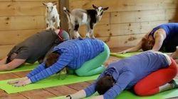 Découvrez le yoga avec