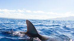 Un requin tue une surfeuse de 17 ans en