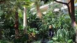 Vivre dans une jungle exotique à