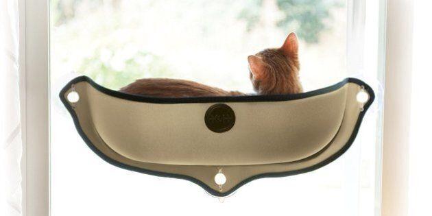 Un gadget génial pour amener vos chats en