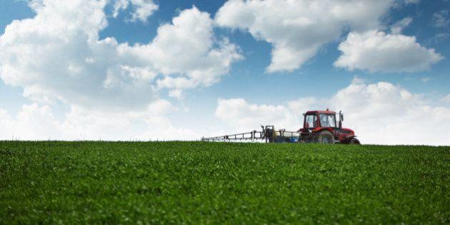 Farming tractor spraying green wheat field with sprayer