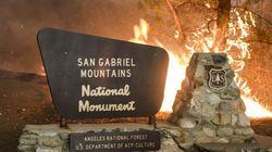 Violents feux de forêts en