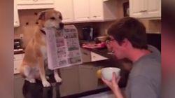 Ce chien est vraiment le meilleur ami de l'homme
