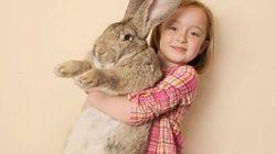 Il devait devenir le plus grand lapin du monde, mais décède à bord d'un vol