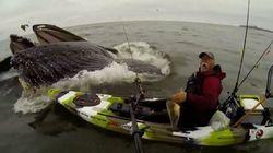 Pas une, mais deux baleines sortent de l'eau près de son