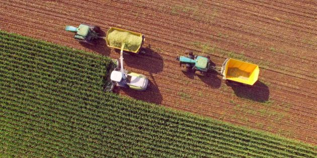 Farm machines harvesting corn for feed or ethanol. The entire corn plant is used, no