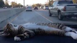 Ce chat en voiture va vous faire oublier vos problèmes