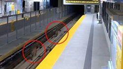 Des cougars sur les rails du SkyTrain près de