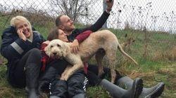 Le chien perdu par Westjet miraculeusement