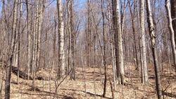 Feu vert de David Heurtel au développement dans le boisé des Hirondelles?