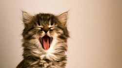 Quand un chaton embête un