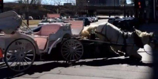 Un cheval de calèche sans cocher heurte de plein fouet une voiture à