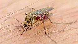 Un résident d'Ottawa a été infecté par le virus du Nil