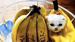 25 costumes d'Halloween pour animaux aussi adorables que rigolos